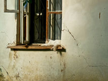 Кот на окне старого дома Стоковое Фото