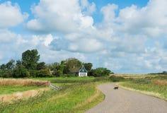 Кот на дороге на острове Texel Стоковое Изображение RF
