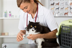 Кот на парикмахере Стоковое Фото