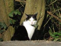 Кот на патруле Стоковые Фото