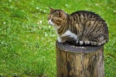 Кот на пне дерева стоковые фото