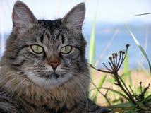 Кот на предпосылке моря Стоковое фото RF