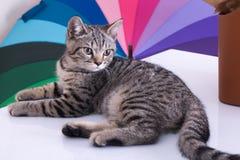 кот на предпосылке цвета на белой таблице Стоковое фото RF