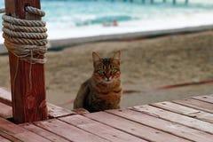 Кот на пляже Стоковые Фотографии RF