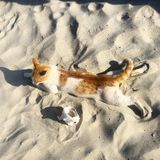 Кот на пляже Стоковое Фото