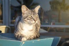 Кот на пляже Стоковая Фотография RF