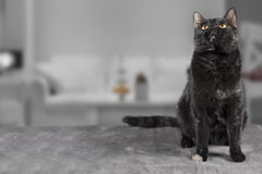 Кот на серой предпосылке Стоковая Фотография