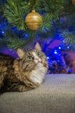 Кот на софе около рождественской елки Стоковая Фотография
