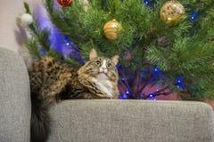 Кот на софе около рождественской елки Стоковое фото RF