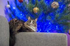 Кот на софе около рождественской елки Стоковое Изображение RF
