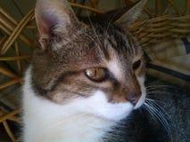Кот на солнце в плетеном стуле Стоковое Фото