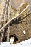 Кот на солнце Стоковые Фото