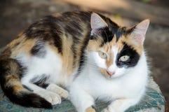 Кот на старом стуле Стоковое фото RF