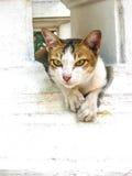 Кот на стене Стоковое Изображение