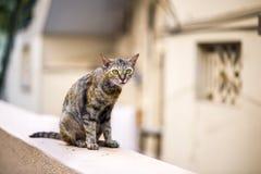 Кот на стене стоковые фото