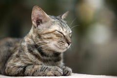 Кот на стене стоковое фото