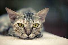 Кот на стене стоковая фотография