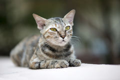 Кот на стене стоковое фото rf