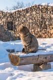Кот на стенде стоковые изображения rf