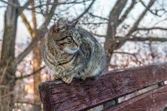 Кот на стенде стоковая фотография rf