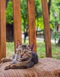 Кот на стуле Стоковое Изображение RF