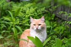 Кот на траве, кот в лесе стоковые изображения