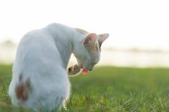 Кот на траве Стоковая Фотография RF