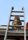 Кот на трапе Стоковые Фото
