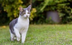 Кот на лужайке стоковая фотография