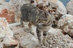 Кот на утесах стоковое фото rf