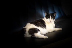 Кот на черной предпосылке Стоковые Изображения