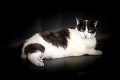 Кот на черной предпосылке Стоковые Фото