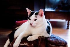Кот на footrest Стоковые Изображения RF