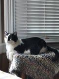 Кот на Partol стоковая фотография
