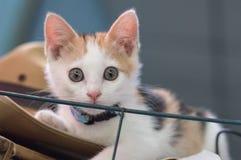 кот немногая белое Стоковое Изображение RF