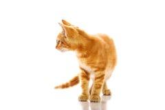 кот немногая красное Стоковая Фотография RF