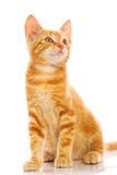 кот немногая красное Стоковые Фото
