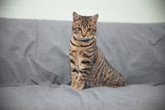 кот немногая Стоковая Фотография