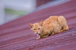 кот немногая Стоковое Изображение
