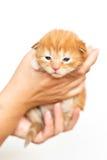 кот немногая Стоковое Изображение RF