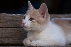 кот немногая Стоковая Фотография RF