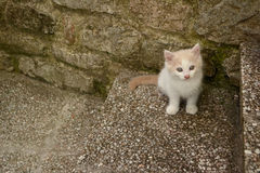 кот немногая Стоковое фото RF