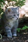 кот немногая Стоковое Фото