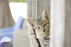 кот немногая Стоковые Изображения