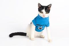 Кот нося голубую предпосылку белизны ona футболки стоковые изображения rf