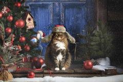 Кот нося шляпу Ushanka Earflap Стоковые Фотографии RF