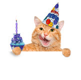 Кот дня рождения стоковая фотография rf