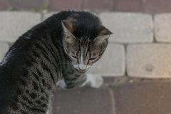 кот одичалый Смотреть вокруг Стоковые Фото