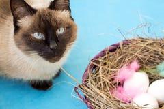 Кот около корзины с покрашенными яичками Стоковая Фотография RF