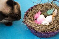 Кот около корзины с покрашенными яичками Стоковое фото RF